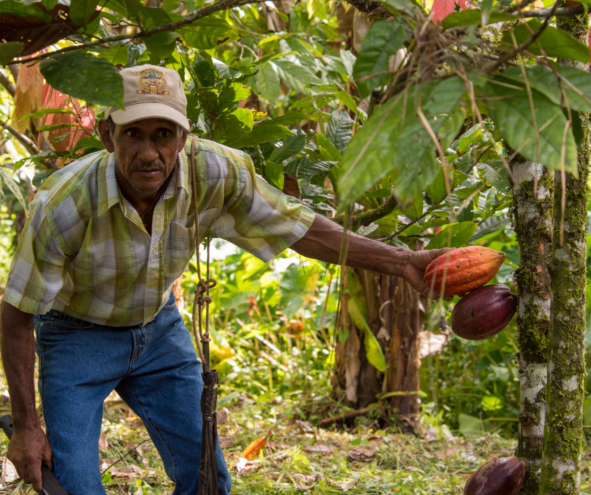 Cacao farmer with trees