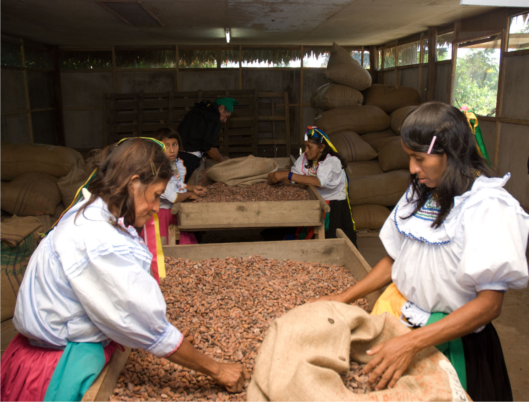 Women farmers with cacao beans